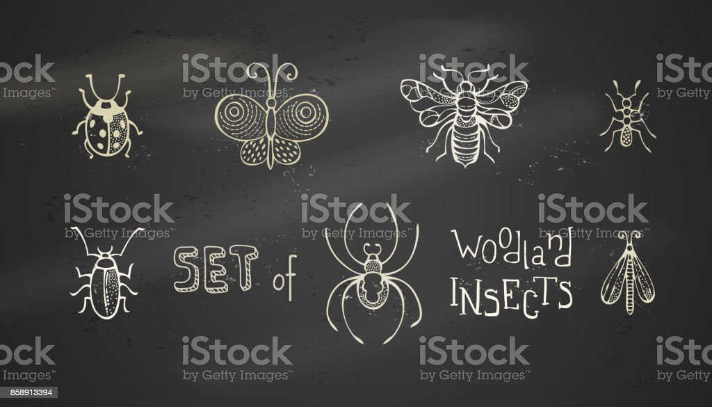 Vector set of chalk woodland insects. vector art illustration