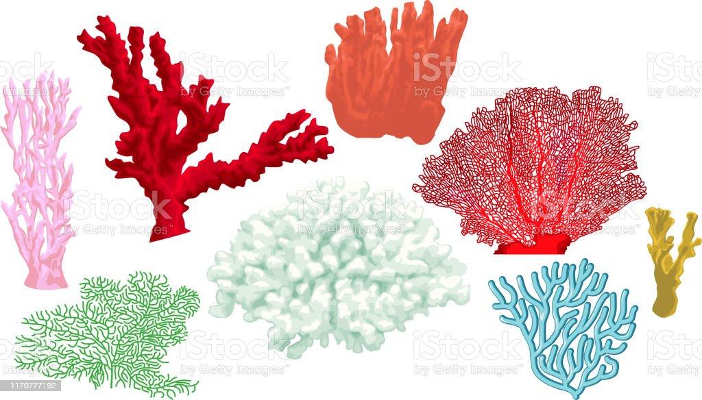 カラフルなサンゴのベクトルセット イソギンチャクのベクターアート素材や画像を多数ご用意 Istock