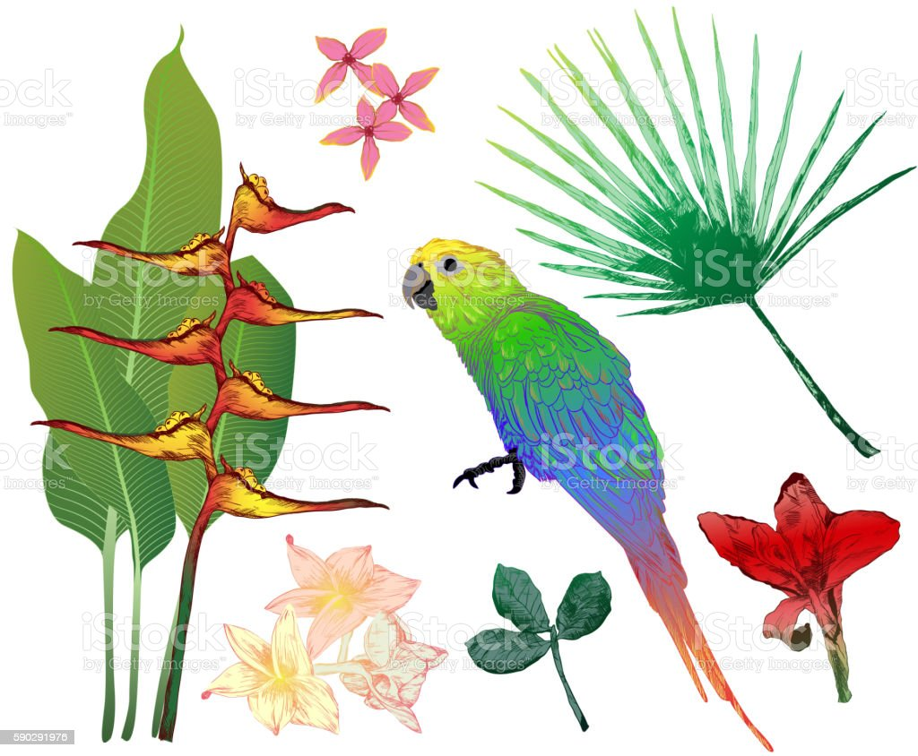 Vector set of colorful tropical elements for your design royaltyfri vector set of colorful tropical elements for your design-vektorgrafik och fler bilder på beskrivande färg
