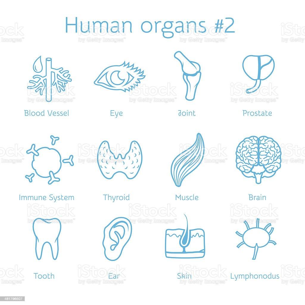 Conjunto De Iconos De Vector De Contorno Con órganos Humanos - Arte ...