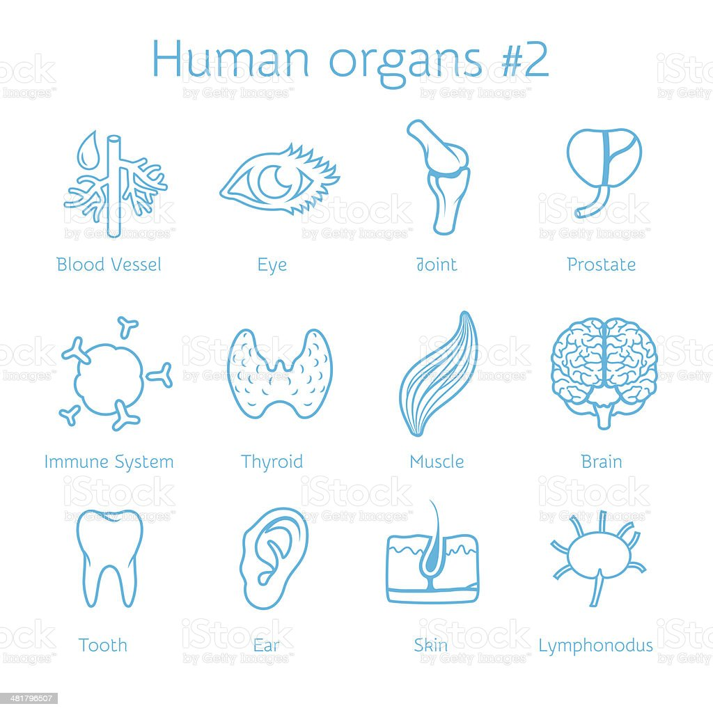 Vector set of contour icons with human organs vector art illustration