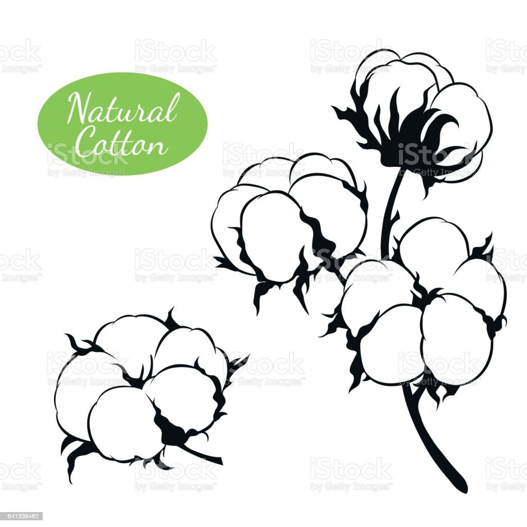 Vector set of cotton plant. Branch with flowers vector art illustration