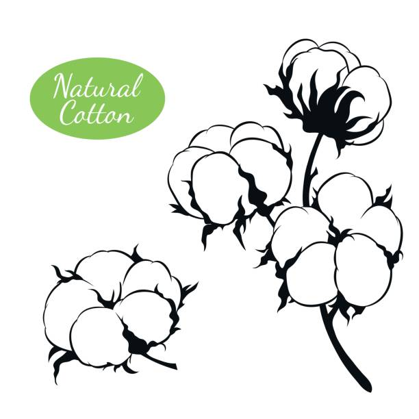 vector set of cotton plant. branch with flowers - cotton stock illustrations, clip art, cartoons, & icons
