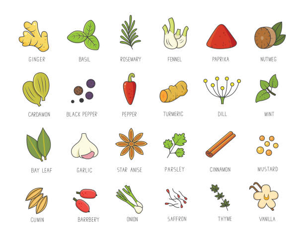 Vector set of culinary spices and herb for your menu or kitchen design. Condiments collection, ginger, basil, paprika, chili pepper, garlic in linear style. Vector set of culinary spices and herb for your menu or kitchen design. Condiments collection, ginger, basil, paprika, chili pepper, garlic in linear style dill stock illustrations