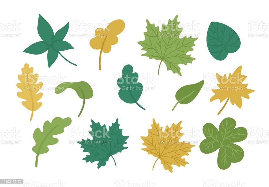 Vector Set Of Cute Autumn Leaves Flat Style Collection With Fall Greenery Funny Falling Maple Oak Chestnut Leaf Illustration Isolated On White Background Stock Illustration Download Image Now Istock