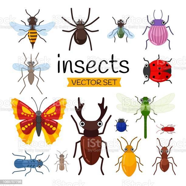 Vector set of cute cartoon insects vector id1065757798?b=1&k=6&m=1065757798&s=612x612&h=6meuz0e 7o1wzhu9mjm53chwzmkbkxquayxffxod9f0=