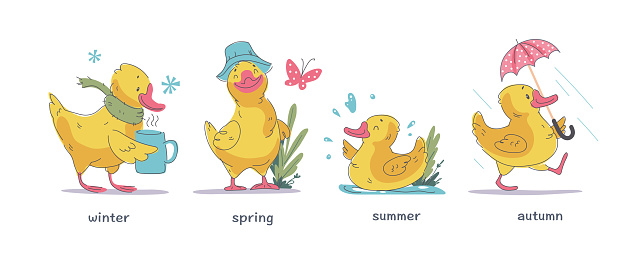 Vector set of cute little yellow baby duck character walking, swimming, smiling isolated on white background in different seasons.