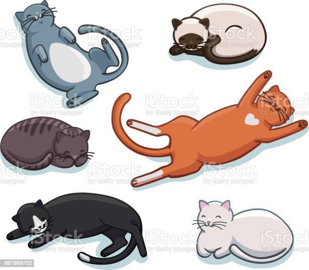 Vector set of cute sleeping cats funny cartoon kittens in different vector id667869752?b=1&k=6&m=667869752&s=612x612&h=3ot8ak ovybrl5cdkdo7plkvnnlh7itxdqzf slba e=