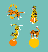 Vector set of cute trained tigers. Circus animal  show. Isolated design elements.