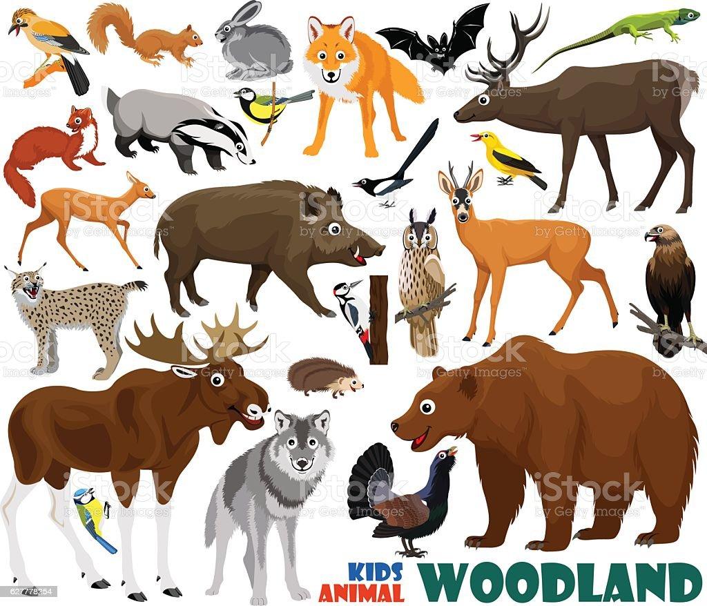 vector set of cute woodland kids animals - Illustration vectorielle