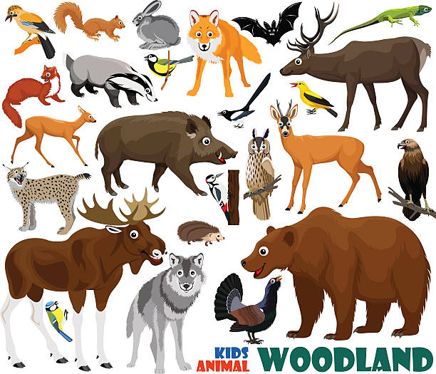 bildbanksillustrationer, clip art samt tecknat material och ikoner med vector set of cute woodland kids animals - tjäder