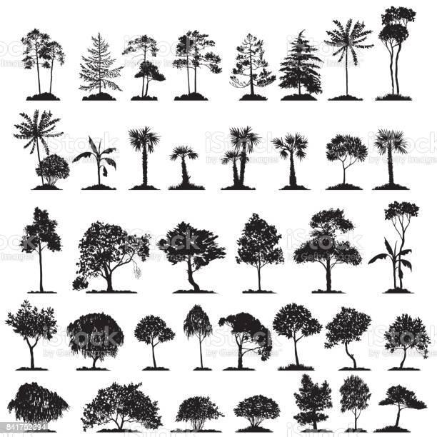 Vector set of deciduous trees vector id841752394?b=1&k=6&m=841752394&s=612x612&h=d lwyyezx tkjfmwsgabbxlffl1i6r6klwytxndazns=