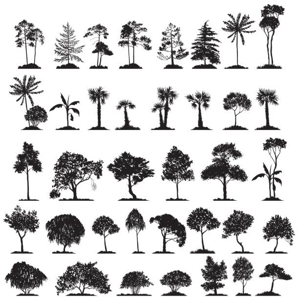 vector set of deciduous trees - куст stock illustrations