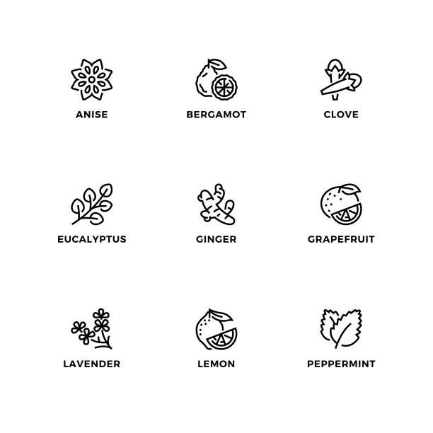 illustrations, cliparts, dessins animés et icônes de ensemble vectoriel d'éléments de conception, modèle de conception de logo, icônes et badges pour les huiles essentielles modifiables. - infusion pamplemousse