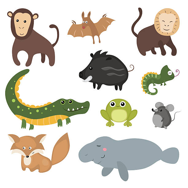 Vector set of different animals of South America. Set of different animals of South America on white background. javelina stock illustrations