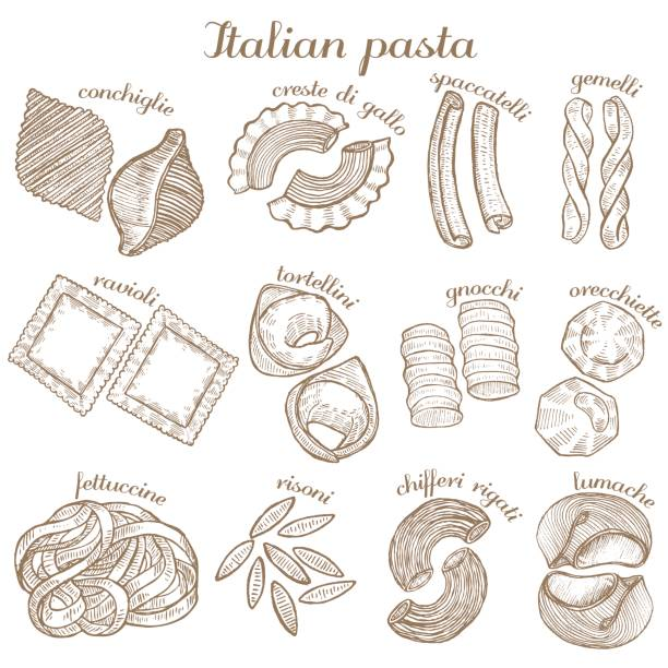 vector set of  different pasta shapes vector set of hand drawn different pasta shapes tortellini stock illustrations