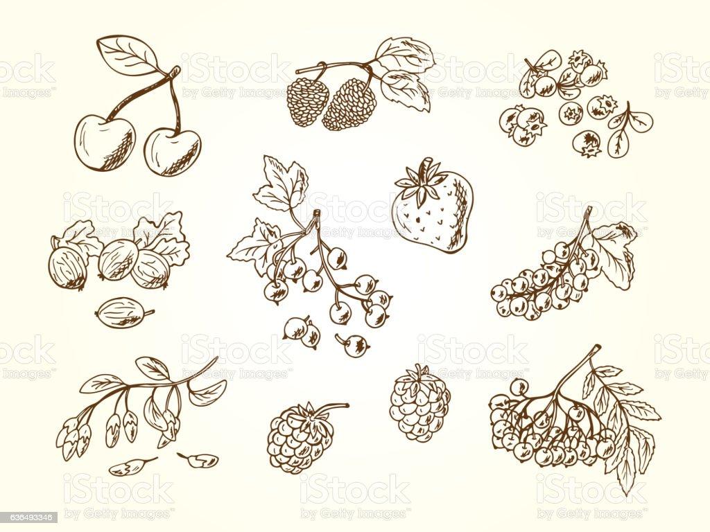 Vector Set of doodle berries vector art illustration