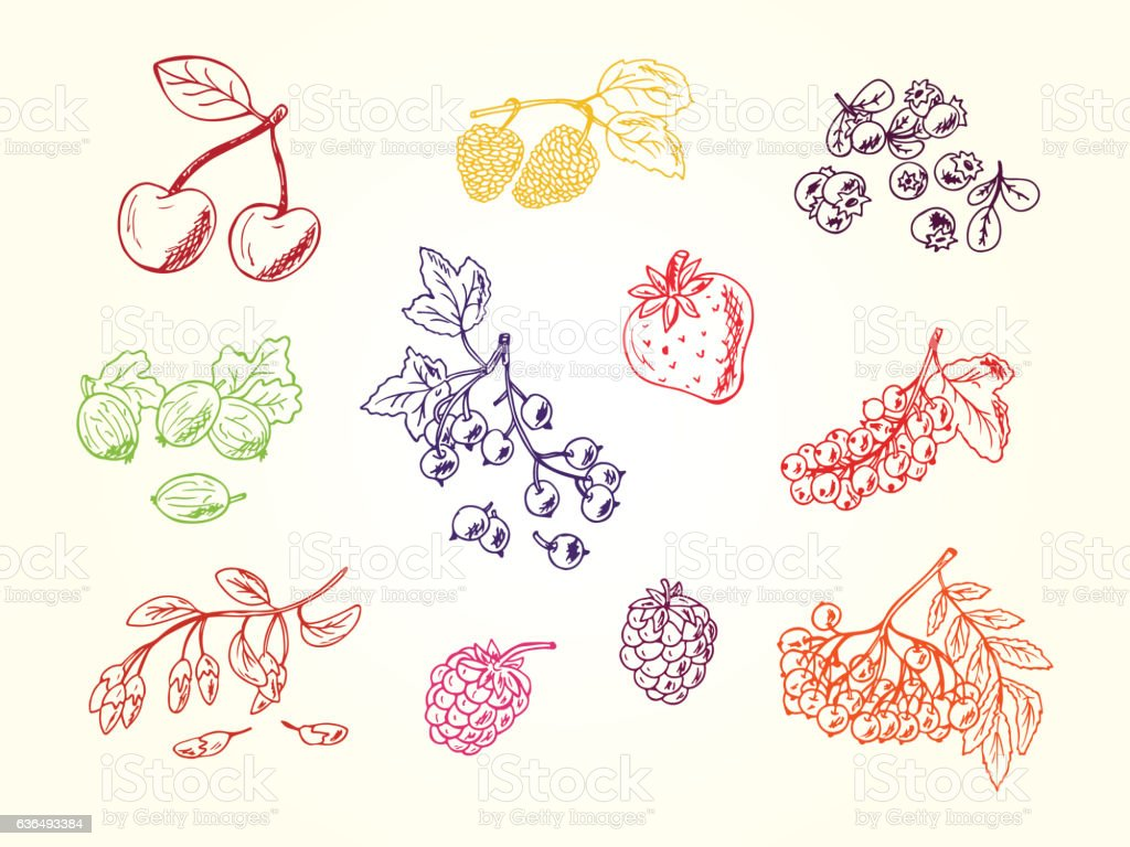 Vector Set of doodle berries vector art illustration