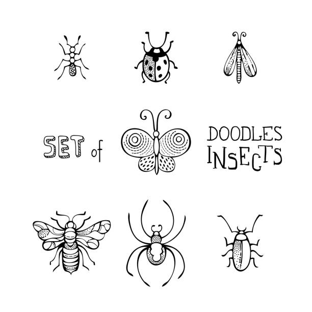 vector set of doodles insects. - bugs stock illustrations, clip art, cartoons, & icons