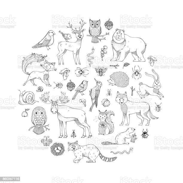 Vector set of doodles wild animals and woodland elements vector id860367116?b=1&k=6&m=860367116&s=612x612&h=yxyjlw9wiw1byu4beyfxwxp k1iijbsepsimszzvo8s=