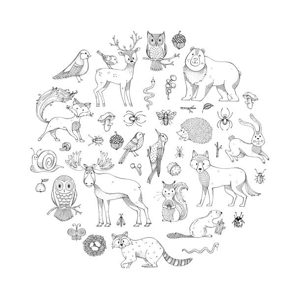 vector set of doodles wild animals and woodland elements. - black and white owl stock illustrations, clip art, cartoons, & icons
