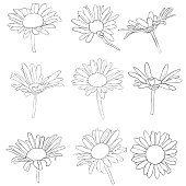 vector set of drawing daisy flowers, floral elements, hand drawn botanical illustration