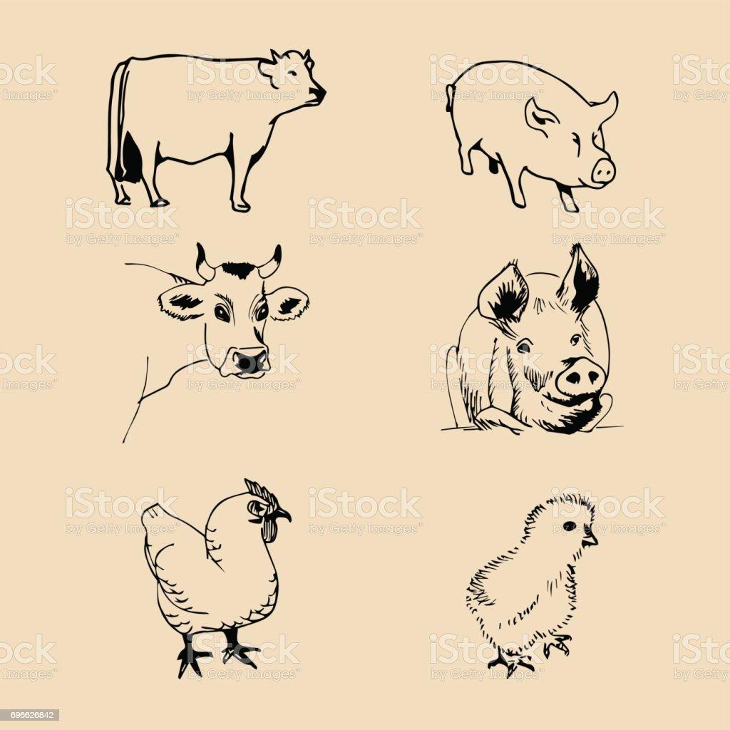 Vektorset Von Nutztieren Hand Skizzierte Abbildungen Mit Schwein ...