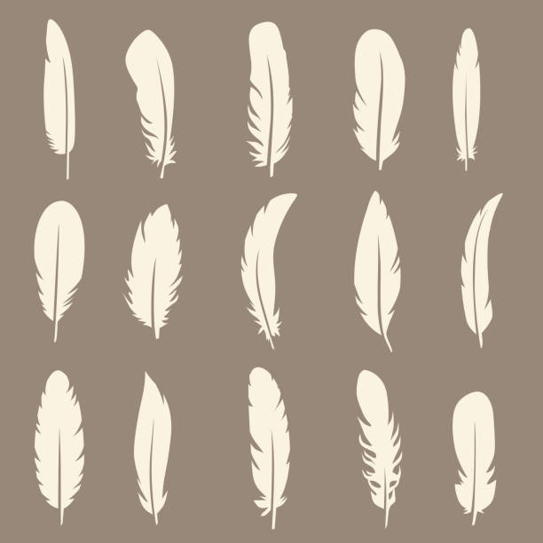 Vector set of feather Vector group of feather. Silhouette set icons bristle animal part stock illustrations