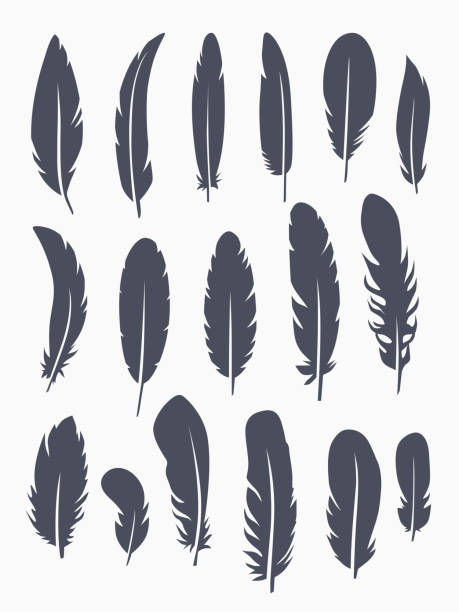 illustrazioni stock, clip art, cartoni animati e icone di tendenza di vector set of feather - piume colorate