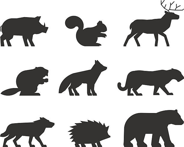 Vector set of figures of wild animals. Vector set of figures of wild animals. Silhouettes wild animals isolated on white. Black wild animals. Shape boar, squirrels, deer, beaver, fox, puma, wolf, hedgehog and bear. beaver stock illustrations