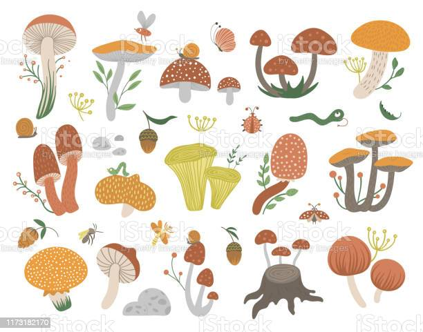Vector set of flat funny mushrooms with berries leaves and insects vector id1173182170?b=1&k=6&m=1173182170&s=612x612&h=9am17e79wu4yoa xlznk5hg1o3menymqt9zwr6nntz8=