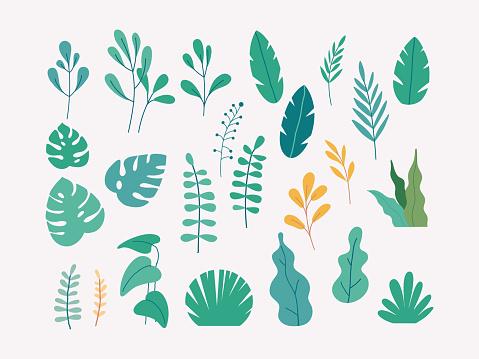 Vector set of flat illustrations of plants, trees, leaves