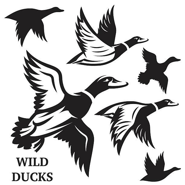 Vector set of flying wild ducks. Vector illustration. Vector set of flying wild ducks. Vector illustration. duck bird stock illustrations