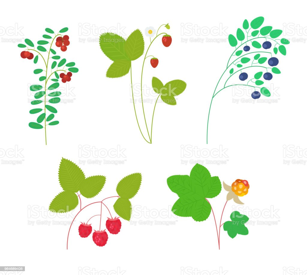 Vector set of forest berries royalty-free vector set of forest berries stock vector art & more images of berry
