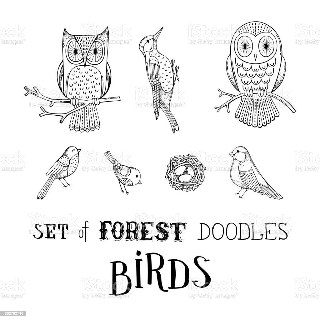 Vector set of forest doodles birds. vector art illustration