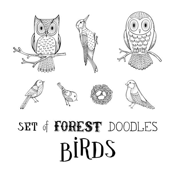 vector set of forest doodles birds. - black and white owl stock illustrations, clip art, cartoons, & icons