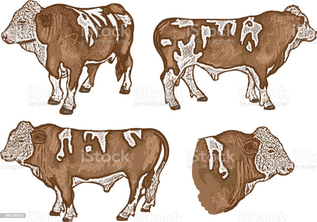 Vector set of four beef cows or steer royalty-free stock vector art
