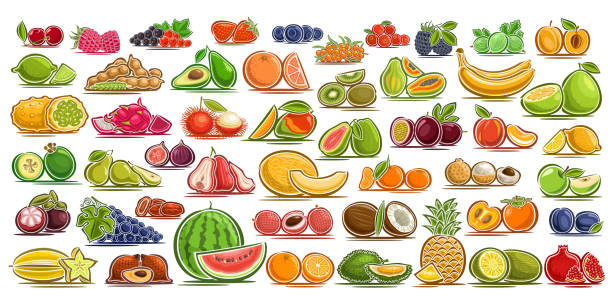 bildbanksillustrationer, clip art samt tecknat material och ikoner med vector uppsättning färska frukter och bär - cactus lime