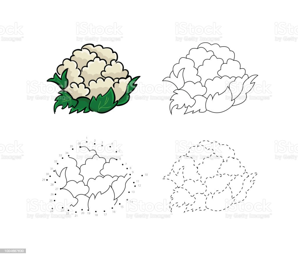 Vector Set Of Fresh Healthy Cauliflower Kids Drawing Child Vegetables Educational Game Page Royalty