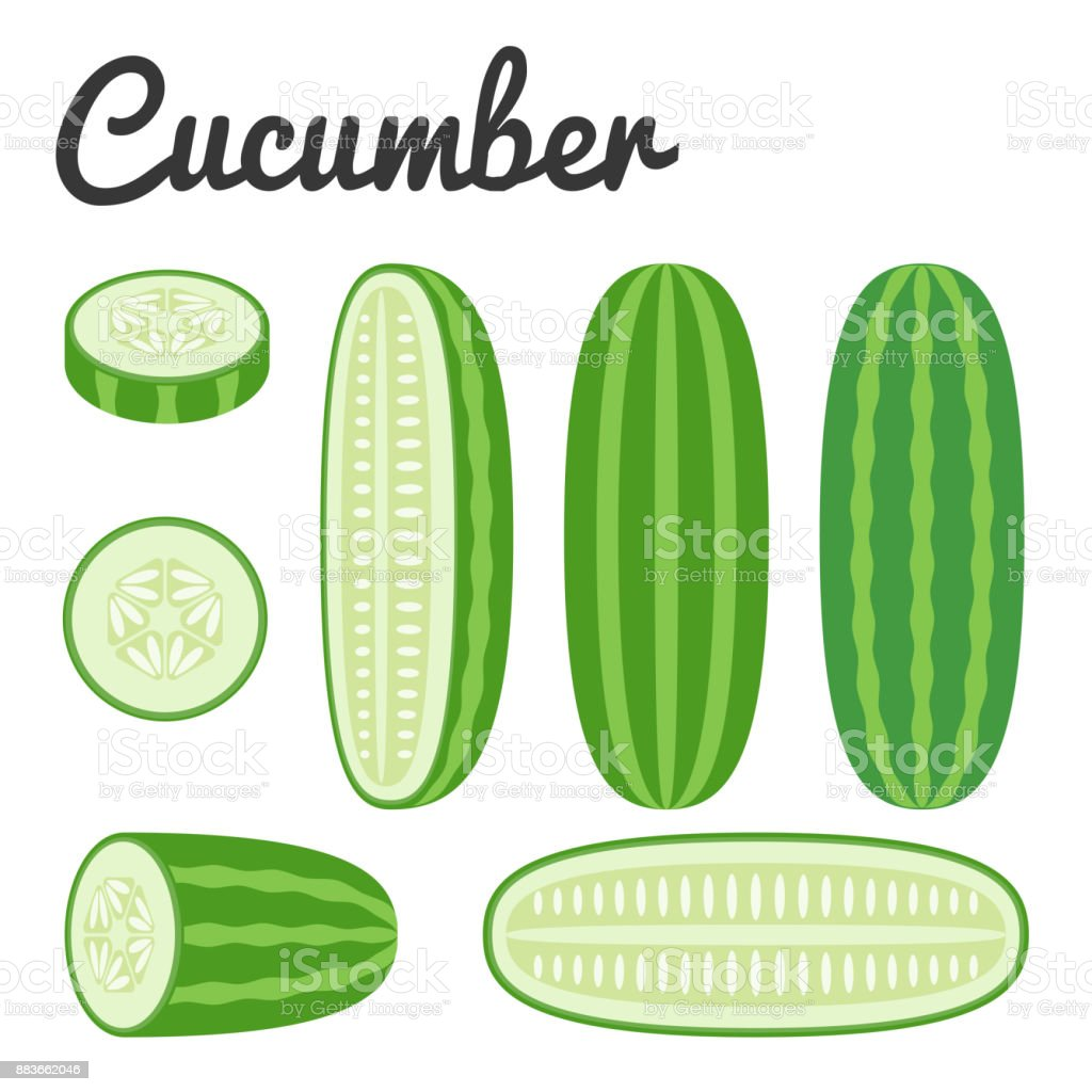 Vector set of fruit and vegetable, cucumber vector art illustration