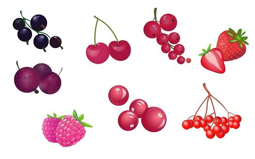 Vector set of garden berries