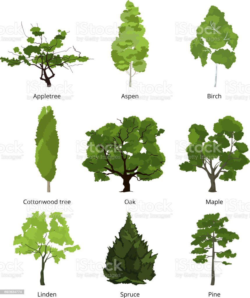 Vector set of green garden trees. Nature illustrations isolate on white vector art illustration