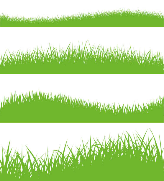 vector set of green grass silhouettes - stock vector. - grass stock illustrations