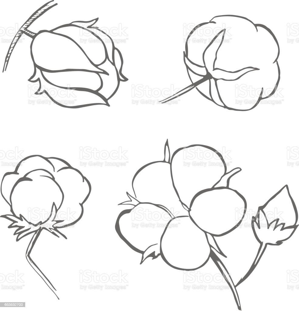 Jeu De Main Vectorielles Dessiner Plante De Coton Dencre Coton Icons