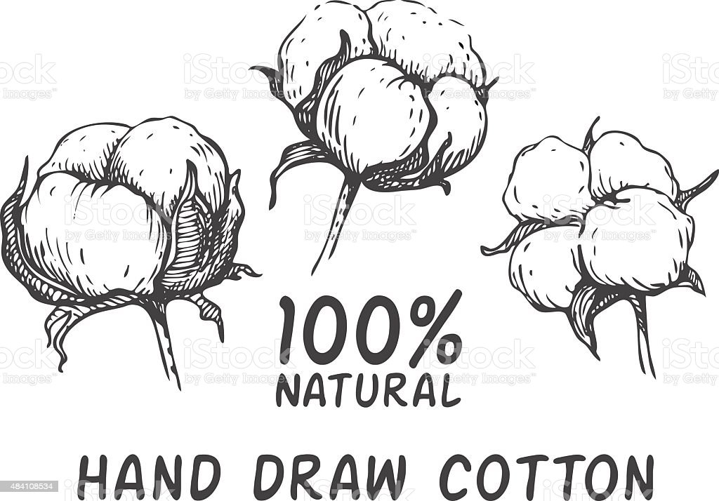 Vector set of hand draw ink cotton plant. vector art illustration