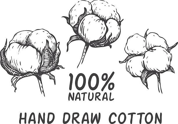 Vektor-Satz von hand zeichnen, tintenblau, Baumwolle, plant. – Vektorgrafik