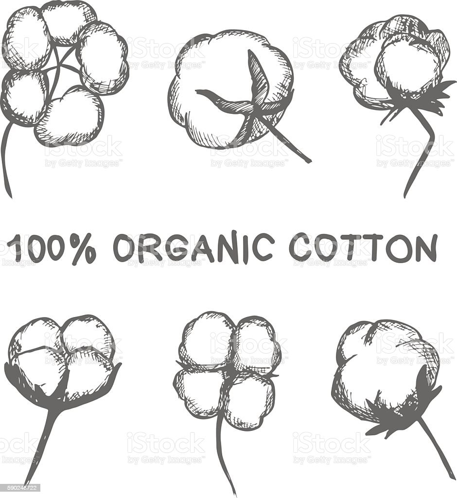 Vector Set Of Hand Draw Ink Cotton Plant Stock Illustration