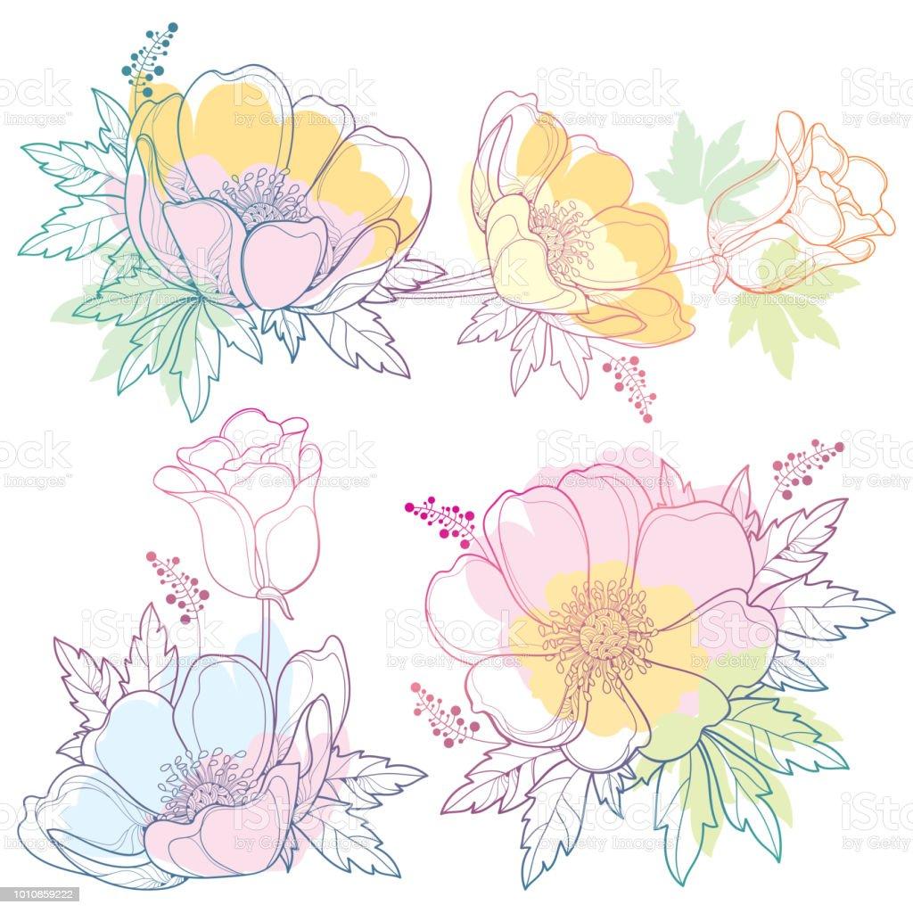 Jeu De Main Dessin Vectorielles Décrivent La Fleur Anémone