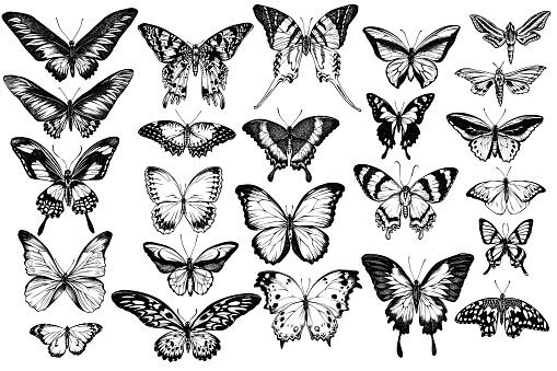 Vector set of hand drawn black and white great orange-tip, emerald swallowtail, jungle queens, plain tiger, rajah brooke's birdwing, papilio torquatus, swallowtail butterfly