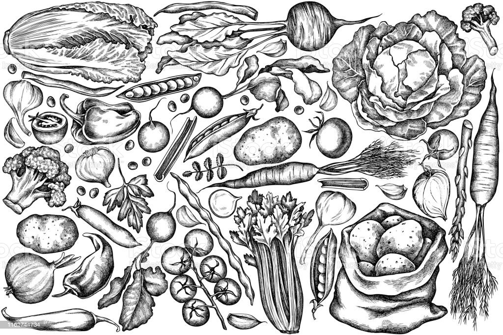 Vector set of hand drawn black and white onion, garlic, pepper, broccoli, radish, green beans, potatoes, cherry tomatoes, peas, celery, beet, greenery, chinese cabbage, cabbage, carrot - Royalty-free Agricultura arte vetorial